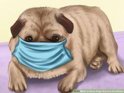 Dog nose muff