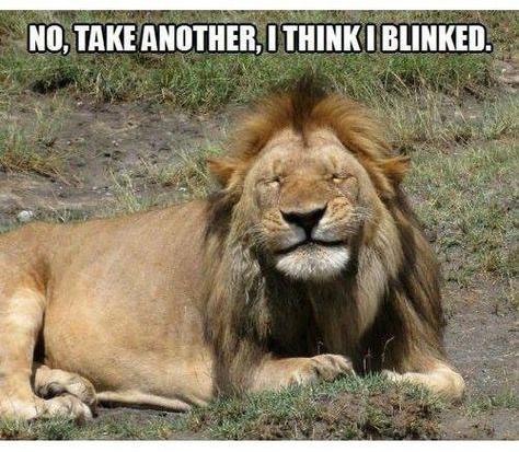 Blinking lion