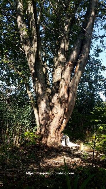 Fair Garden Tree